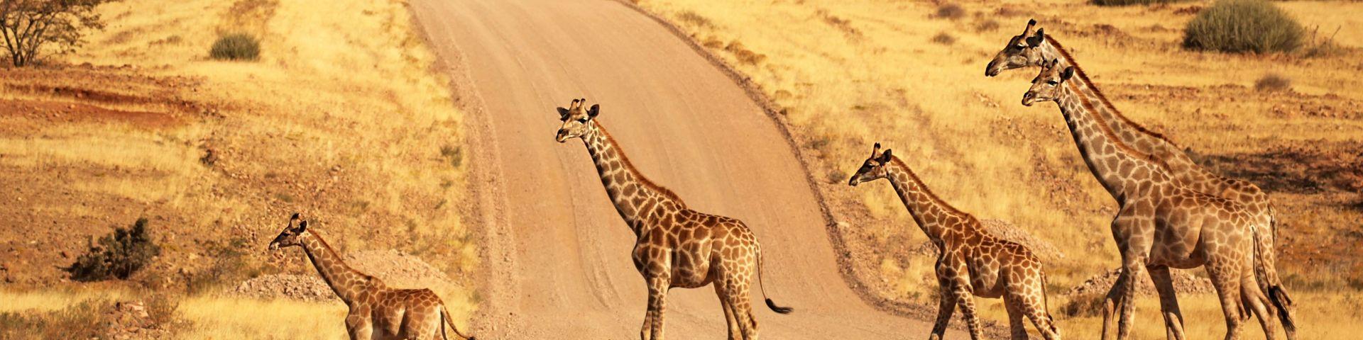 Hakuna Matata - Sorgenfrei durch Namibia